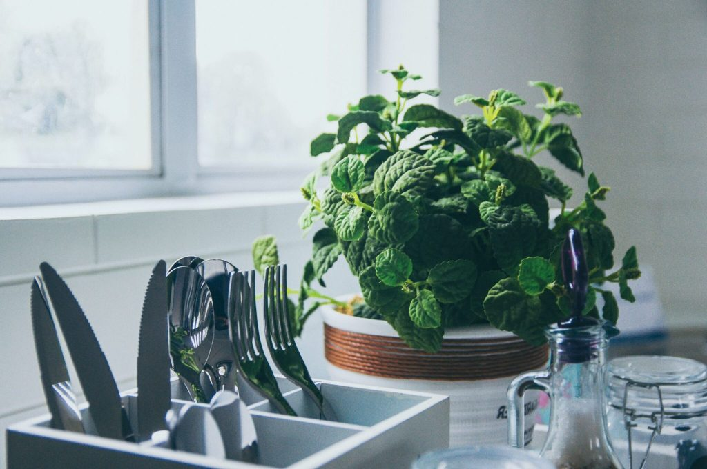 herbs - grow your own